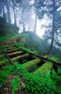 overgrown-railroad-tracks-forest--large-msg-135066832035